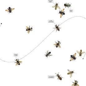 Xylocopa varipuncta Bombus crotchii Megachile montivaga Osmia laeta Lasioglossum incompletum Xylocopa tabaniformis Megachile fidelis Bombus vosnesenskii Halictus ligatus Ashmeadiella bucconis