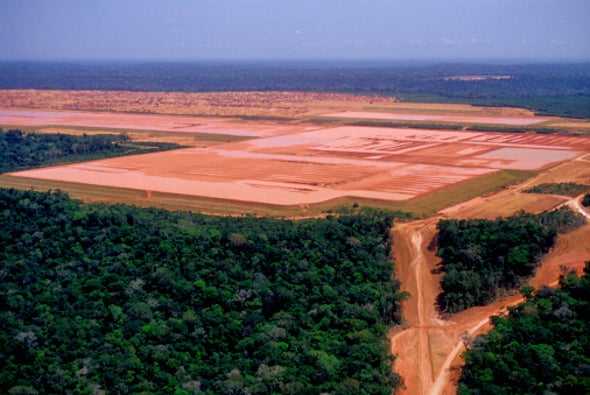 Human Price of Forest Destruction Paid in Plague