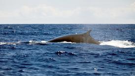 Nuclear Bomb Sensors Eavesdrop on Whales