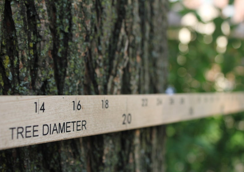 Foresters Now Monitoring Tree Populations from Space [Slide Show]