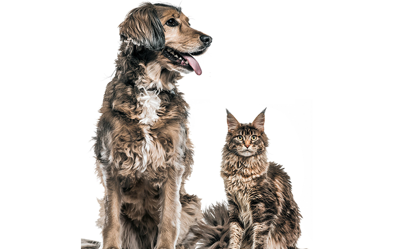 Dogs Have a Lot More Neurons Than Cats - Scientific American