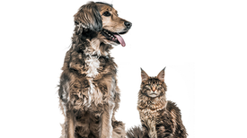 Dogs Have a Lot More Neurons Than Cats