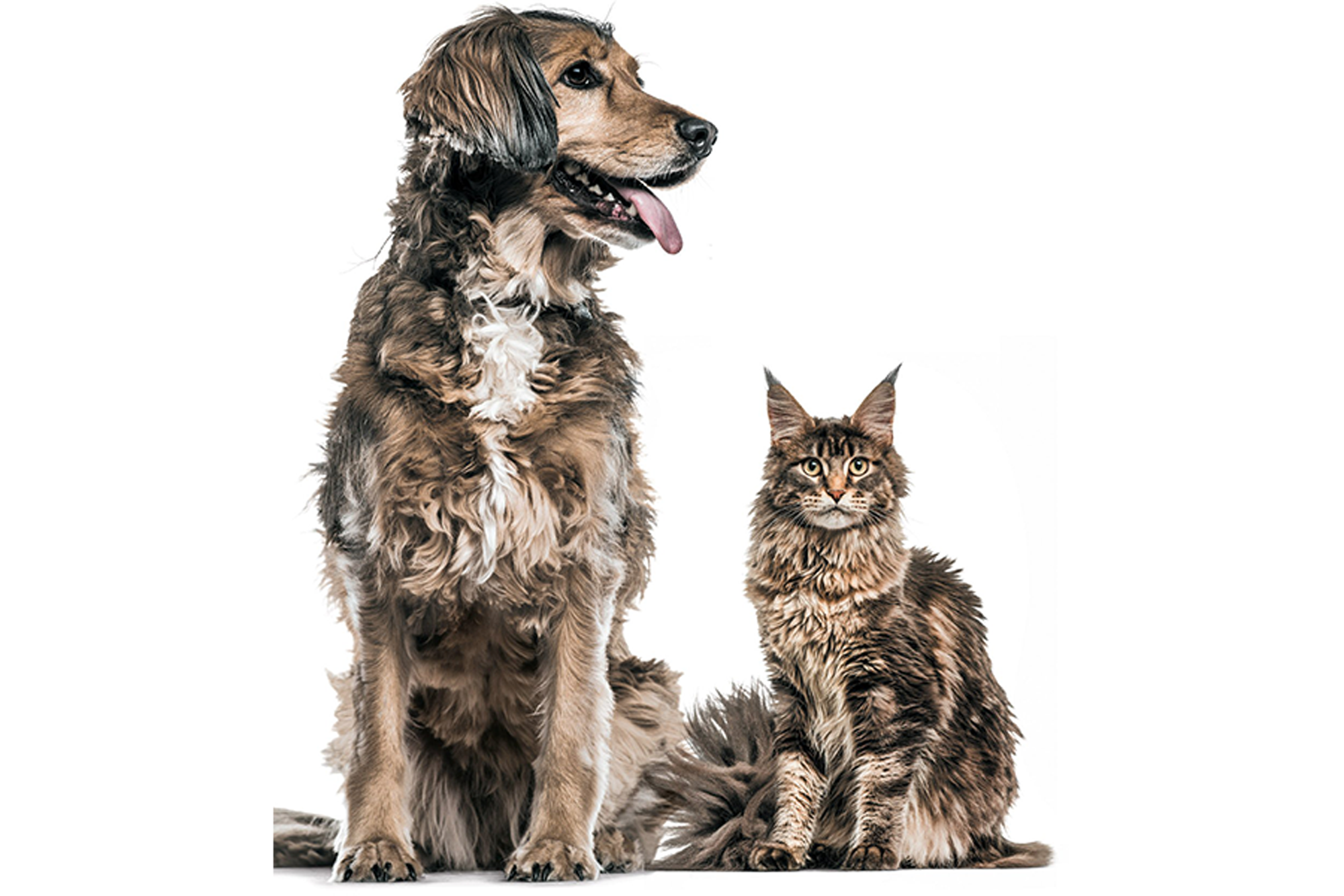 Pets: a selection of articles