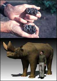 Ethiopian Fossil Finds Elucidate Elephant Evolution