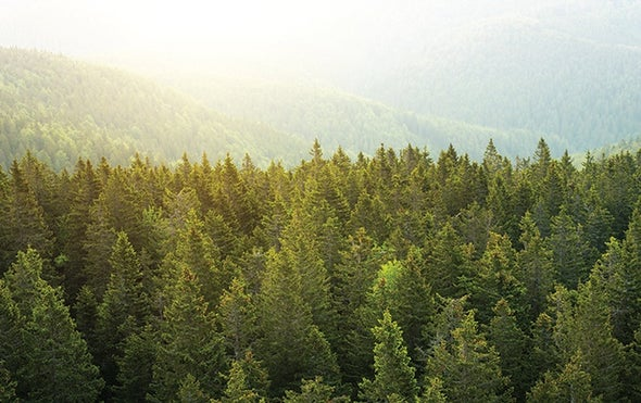 Acreage of Pristine Landscapes Declined Significantly So Far This Century