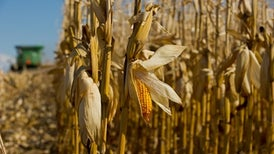 Rising Temperatures Could Cut Corn Production