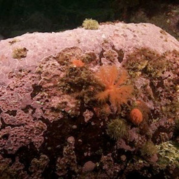 """Ancient Arctic Algae Record Climate Change in """"Tree Rings"""""""