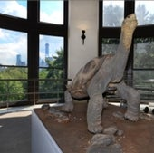 Lonesome George's Regal Stance: