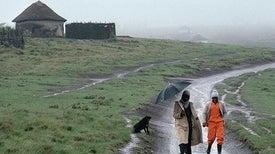 Mobile-Phone Signals Bolster Street-Level Rain Forecasts