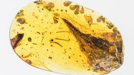 World's Smallest Dinosaur Is Probably a Lizard