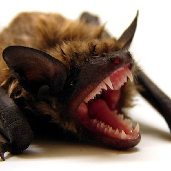 Color Bind: A New Study Finds Wind Turbine Color May Play a Role in Bat Fatality Rate