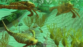 What Sparked the Cambrian Explosion?