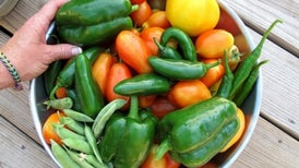 Eat More Plants to Improve Health, Combat Climate Change