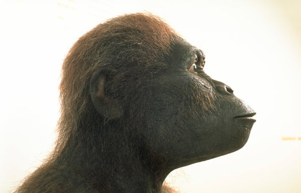 Meet Chewie, the Biggest Australopithecus on Record