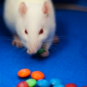 Simply Irresistible: Scientists Trace Gluttony's Path in the Brain