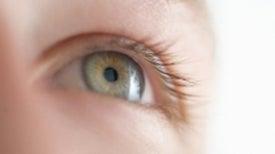 Human-Eye Precursor Grown from Stem Cell