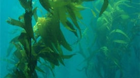 Zooniverse: Floating Forests
