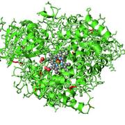 Revolution in Evolution Wins 2018 Nobel Prize in Chemistry