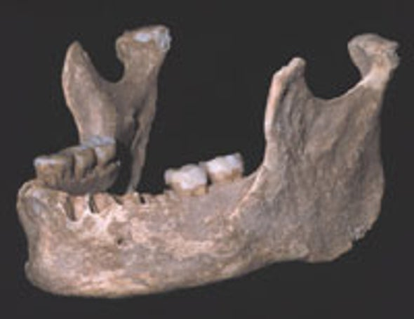 Jawbone Hints at Europe's Earliest Modern Humans