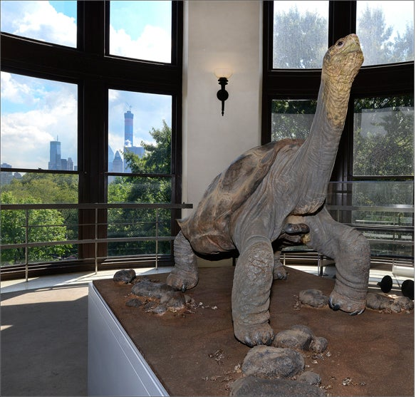Lonesome George, the Last of His Kind, Strikes His Final Pose [Slideshow]