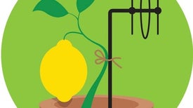 """An """"Internet of Plants"""" Could Tell Farmers When Crops Need Watering"""