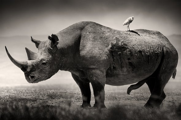 See Stunning Collection of Portraits of Africa's Most Endangered Wildlife