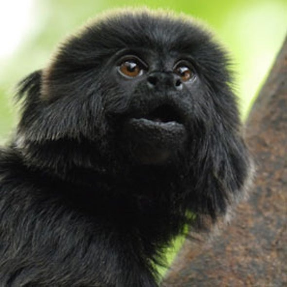 Monkey's Alarm Calls Reveal Predator's Who and Where