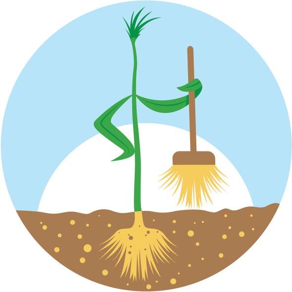 Plant Absorbs Toxic RDX Contamination