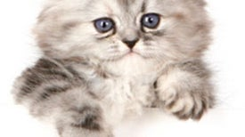 Decoding Cats: What Purrs, Meows and Licking Mean