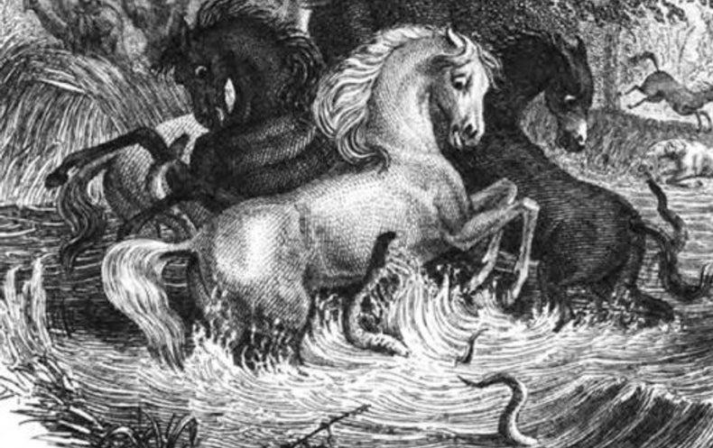 Electric Eels Versus Horses Shocking But True Scientific American