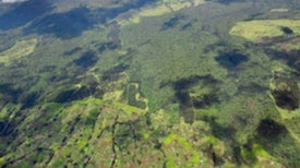 Clearing Forests May Transform Local—and Global—Climate