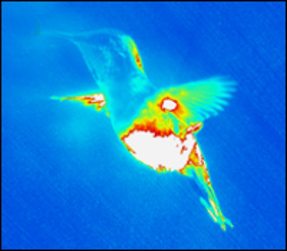 High-Tech Pictures Reveal How Hummingbirds Hover