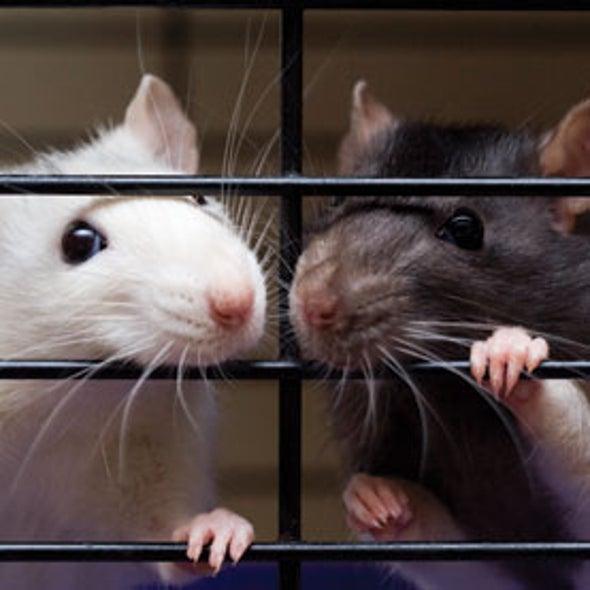 Rats Display Altruism