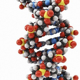 DNA (deoxyribonucleic acid) molecul