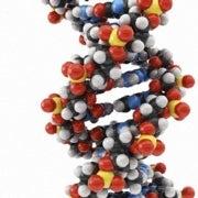 Unhidden Traits: Genomic Data Privacy Debates Heat Up
