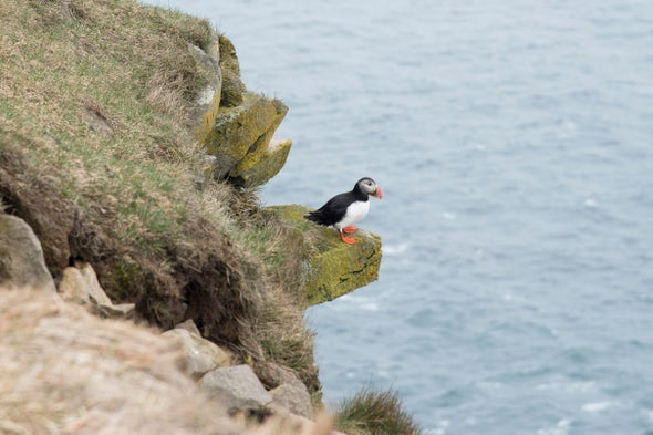 Earlier Springs May Mean Mistimed Bird Migrations