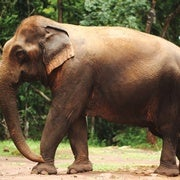 Trump Administration Lifts Ban on Imports of Elephant Hunting Trophies