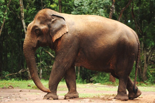 trump administration lifts ban on imports of elephant hunting