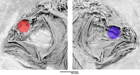 Side Step: Asymmetrical Skull Links Modern Flatfish to Ancient Relatives