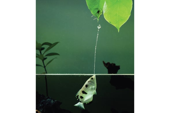 Fishes Use Problem Solving and Invent Tools