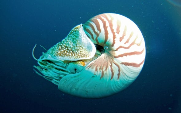 Big Pacific: Photos from One of Earth's Great Oceans