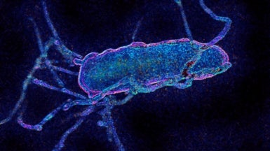 Most Extensive Reengineering of an Organism's Genetic Code Now Complete