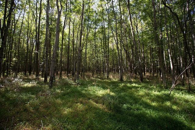 Should American Wood Fuel European Power?