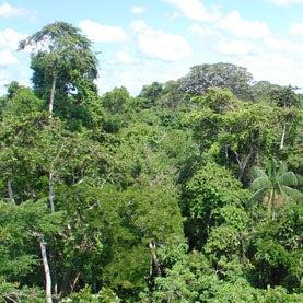 Amazon rainforest near Puerto Maldonado