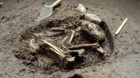 Ancient Dog DNA Reveals Close Relationship with Contagious Cancer