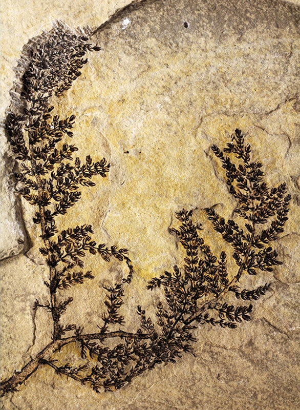 Ancient Aquatic Flora Was among the First Flowering Plants