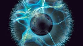 Neuron Transplants May One Day Reverse Blindness