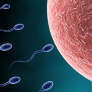 Lab-Made Egg and Sperm Precursors Raise Prospect for Infertility Treatment