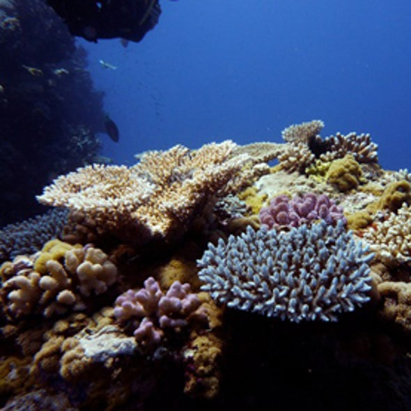 Warming Ocean Current Might Create Coral Refuges