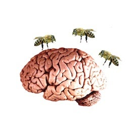 bees-around-brain